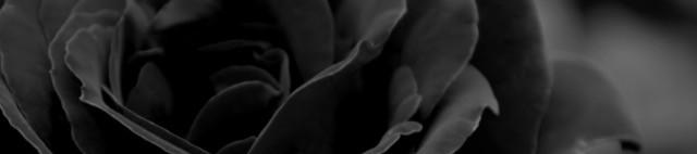cropped-rose-21.jpg